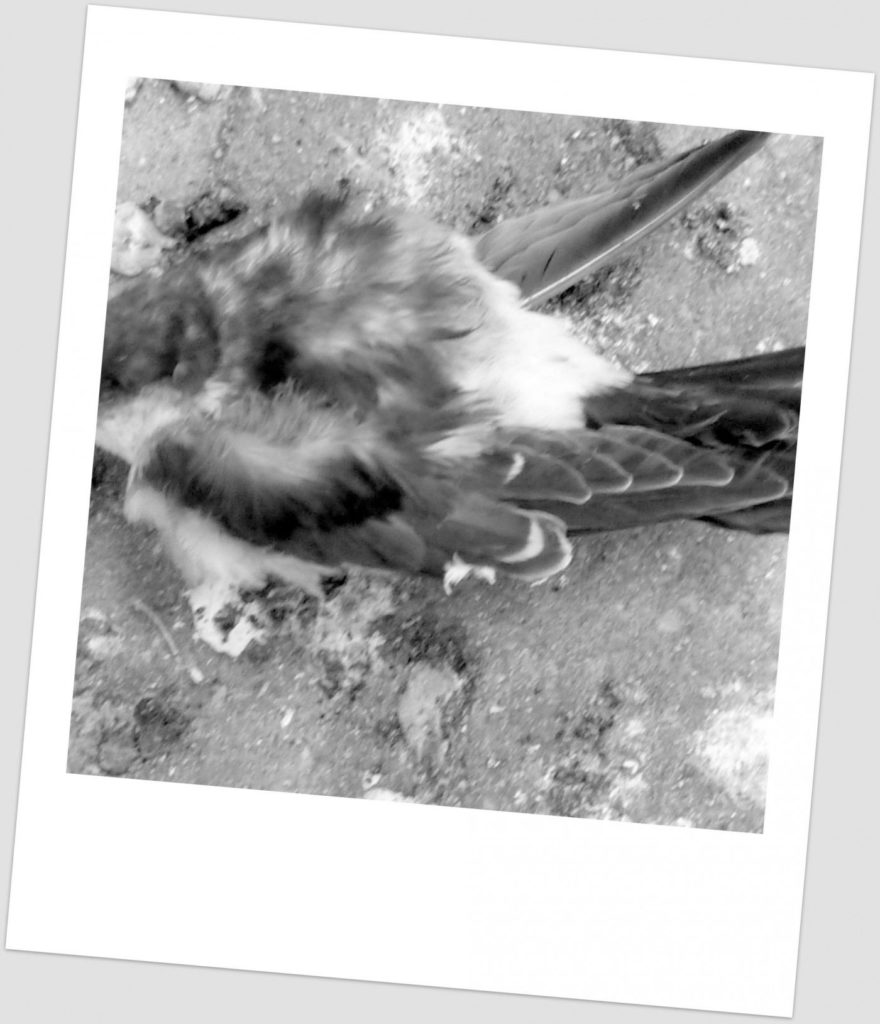 laat je creativiteit niet als een dood vogeltje zijn, gebruik je iPad en leer op de iPadkunstacademie van Rita Koolstra hoe je die kunt inzetten voor kunst op hoog niveau