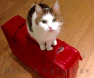 Rita Koolstra's kat vindt het niet leuk als Rita op reis gaat